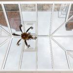W8 – Kensington Conservatory - image 9